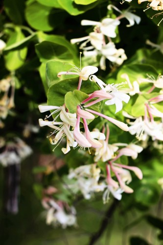 Volatiles: A Simple Explanation for a Delightful Summer Scent