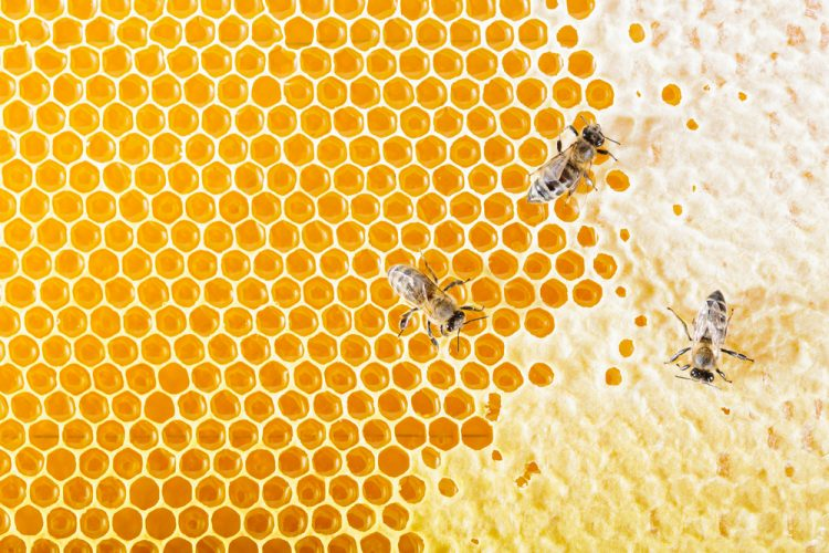 bees-crawling-on-honeycomb